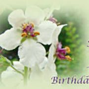 Happy Birthday - Floral - Moth Mullein Poster