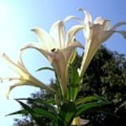 Happy Easter Lilies Poster