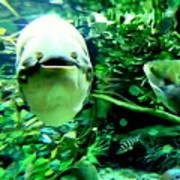 Happy Fish Poster