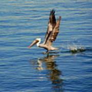 Happy Landing Pelican Poster