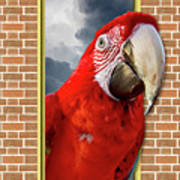 Happy Red Parrot Poster
