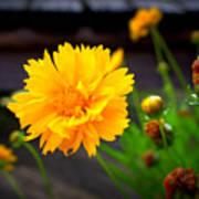 Happy Spring Flower Poster