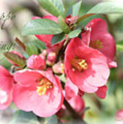 Happy Spring Flowering Quince Card And Poster Poster