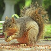 Happy Squirrel Poster