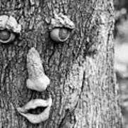Happy Tree In Black And White Poster