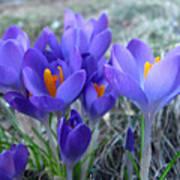 Harbinger Of Spring Poster