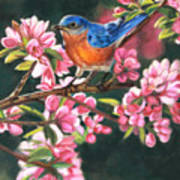 Harbingers Of Spring Poster by Deb LaFogg-Docherty