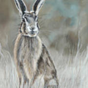 Hare At Dawn Poster