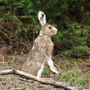 Hare That Poster
