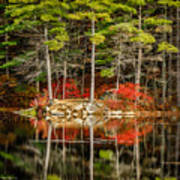 Harold Parker State Park In The Fall Poster