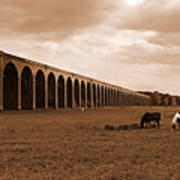 Harringworth Viaduct And Horses Grazing Poster