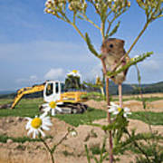 Harvest Mouse And Backhoe Poster