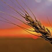 Harvest Sunset Poster