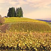 Harvest Time In A Vineyard Poster by Margaret Hood