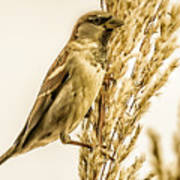 Harvest Time Iv Poster