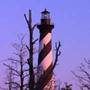 Hatteras Light And Tree Poster