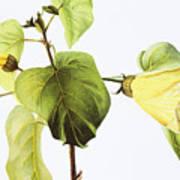Hau Plant Art Poster