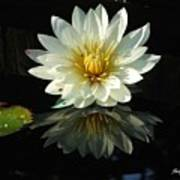 Haven Hospice Water Lily Poster