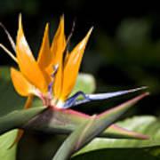 Hawaii Flora 13 Poster