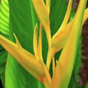 Hawaii Golden Torch Poster