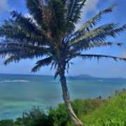 Hawaii Palm Poster