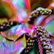 Hawaii Plants And Flowers - Tropics Poster