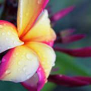 Hawaii Plumeria Flower Jewels Poster