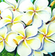 Hawaii Tropical Plumeria Flower #224 Poster