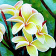 Hawaii Tropical Plumeria Flower #225 Poster