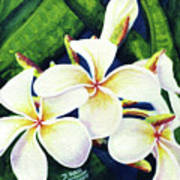 Hawaii Tropical Plumeria Flowers #160 Poster