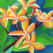 Hawaii Tropical Plumeria Flowers #232 Poster