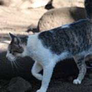 Hawaiian Feral Cat 2 Poster
