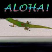 Hawaiian Gecko Poster