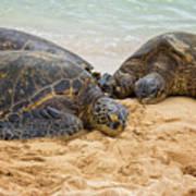 Hawaiian Green Sea Turtles 1 - Oahu Hawaii Poster