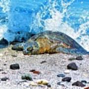 Hawaiian Green Turtle Honu Poster