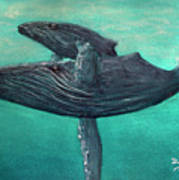 Hawaiian Humpback Whales #455 Poster
