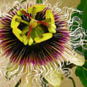 Hawaiian Lilikoi Poster by James Temple