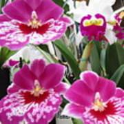 Hawaiian Orchid 5 Poster
