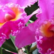 Hawaiian Orchid 6 Poster