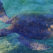 Hawaiian Sea Turtle Poster