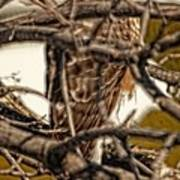 Hawk King Outside My Window Poster