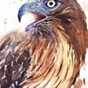 Hawk Watercolor Poster