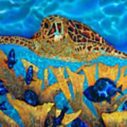 Hawksbill Sea  Turtle Poster