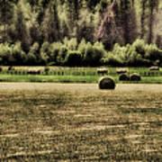 Hay Harvest Poster