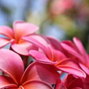 He Pua Lahaole Ulu Wehi Aloha Poster