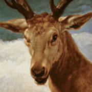 Head Of A Stag Poster