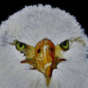 Head Of An Eagle  Poster