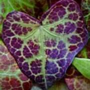 Heart Leaf Poster