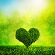 Heart Shaped Tree Growing On Green Grass Poster