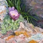 Hedgehog Cacti Poster by Debra Mickelson